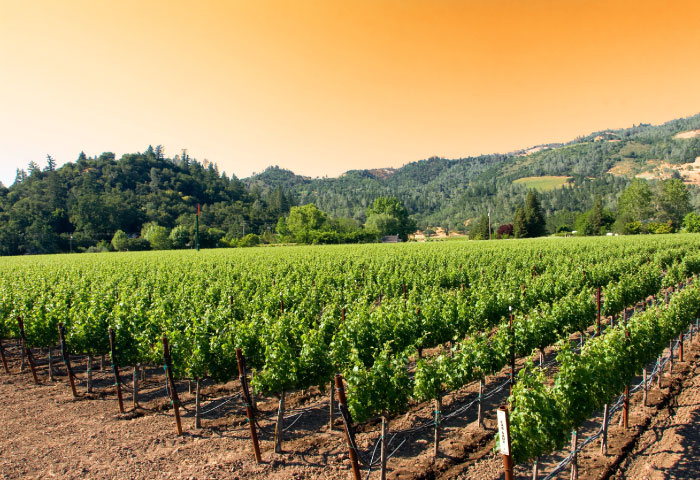 Vineyard Tour Package